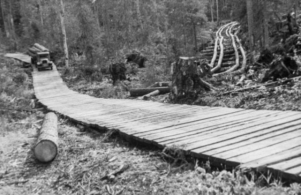 Лесорубы, вырубившие гигантские деревья Британской Колумбии, 1900-1930 гг