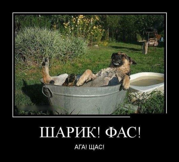 Образ собаки в демотиваторах
