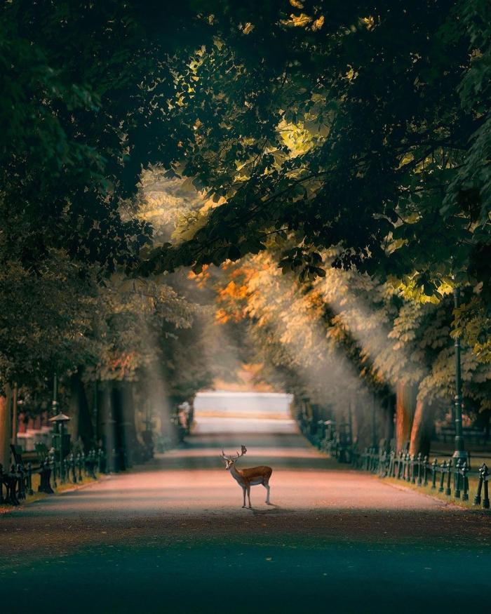 Захватывающие городские пейзажи Дориана Пеллумби