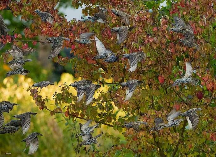 Симпатичные птички на снимках Kotics Zsolt