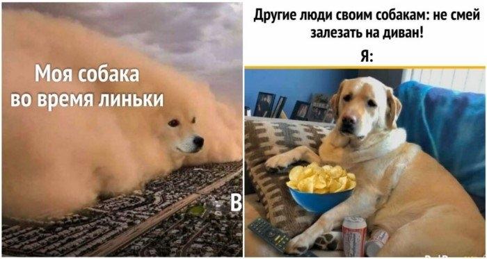 Каково это - жить с собакой? 25 правдивых и забавных мемов