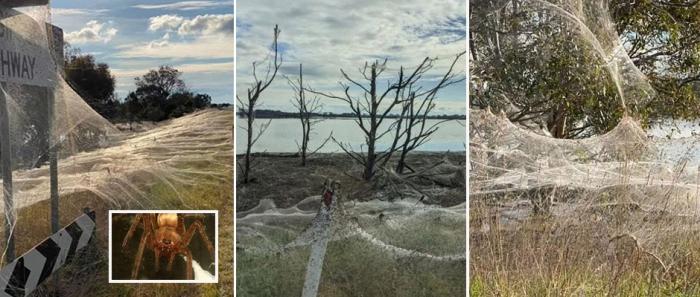 Паучий апокалипсис в Австралии