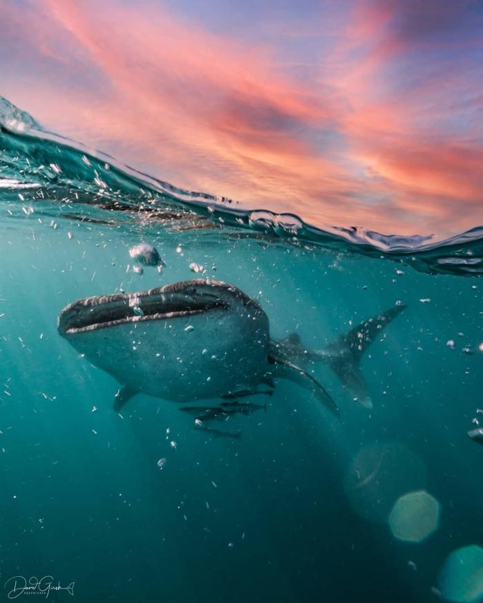 Увлекательные подводные фото Дэвида Гирша