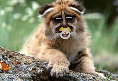 Забавная фотожаба на животных! (19 фото)