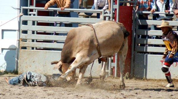 За бой с быком, в Испании дают 20.000$